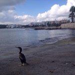 """RT """"@toniapico: Un turista de excepción contemplando nuestro paisaje #santaeulariadesriu #ibiza http://t.co/DVNhjXwpvP"""""""