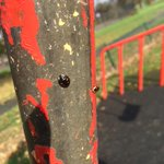 Bombarded by ladybirds in the park #crazyweather #globalwarming #sheffieldissuper http://t.co/neC9107ait