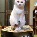「おやつをください」 「さもなければ」 「化け猫になっちゃうよ」???????? #猫 #ネコ #cat #猫部 #ネネココ #ハロウィン #halloween #trick or treat http://t.co/NY5mViwx5v