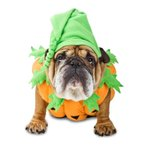 LOVE this! You will too! Join us, 6-7am this morn for BEST dog Halloween costume show EVER! #LiveonK2 w/ @ZeldaWisdom http://t.co/lSpDRR7GV9