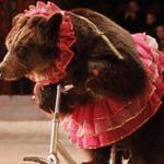 Adiós definitivo a los circos con animales en Mérida; conoce el reglamento http://t.co/H49sZ21jpM #Yucatán http://t.co/7AxxNKeC8W