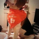 Trick or Treaters welcome but be prepared to be licked to death! :-) #BillytheBeagle http://t.co/upuhjiy9LA