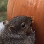 Why you should let a squirrel carve your pumpkin: http://t.co/hn2iP2qV2Q http://t.co/PAqvLGoqUo