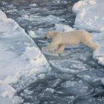 #MeAsusta que en los últimos 30 años, el 75% de los hielos del Ártico hayan desaparecido. RT para que todos lo sepan! http://t.co/mhLXx90dJ5