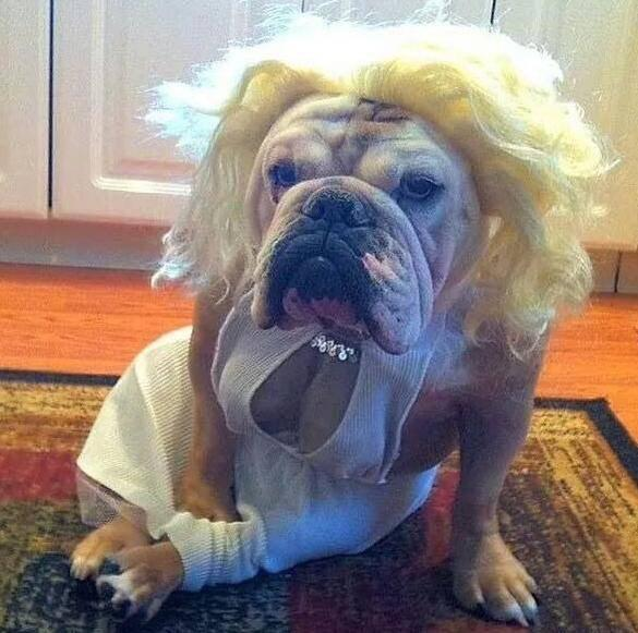 If you ever been to a Halloween frat party… RT @blunted215: I've done worse RT @A_mericanMuscle: Happy Halloween http://t.co/nGnNAuO0YG