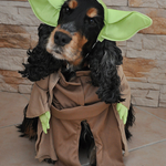 Unsere @1414-Kollegen zeigen euch 10 #Halloween-Kostüme auf vier Pfoten: http://t.co/Oi9La3dx12 http://t.co/bYmOU8BDaW