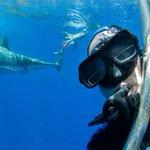 Holandês faz sucesso após postar selfie com tubarão branco ao fundo http://t.co/Zrd7lOsSk5 #G1 http://t.co/0mZzTbwk4v