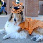 Happy #Halloween, Ags! RT if you love Miss Revs costume! #tamu http://t.co/NsBjtFBUsA