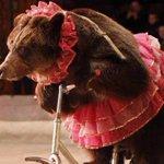 Nuevo reglamento prohíbe los circos con animales en Mérida... http://t.co/Q5TbpkKMaY http://t.co/j4QclxArzl