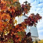 Euch allen ein schönes Herbst-Wochenende! http://t.co/M8QMM5tGOC