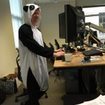 Panda, hard at work http://t.co/Z7KFmVMkYT