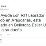 """@RosarioAguilar1:#Xalapa ????Labrador ENCONTRADO en ARAUCARIAS, RT! http://t.co/TUqKo1Vnnb"":@VialidadXalapa @gaferat1 @Barbs_baez @mitzi_arias"