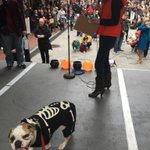 Congrats to @TrumanCRoyle on winning scariest dog at Doggone Halloween Day! So excited to win! http://t.co/EVb8E5HRyX