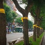 Quin goig que fa Tarragona tota tenyida de groc! Tarragona dirà #sisi, fes RT #paisgroc #9N @assemblea @ANCTarragona http://t.co/sv7hDR2GWM