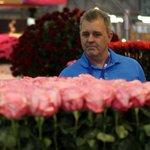 #Holanda se embellecerá con las mejores #rosas del mundo ---> #Ecuador http://t.co/UsSJkPzgyj http://t.co/WjqFXGW5bl vía @ElCiudadano_ec