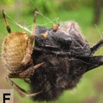 These photos of bat-eating spiders are the scariest thing youll see today http://t.co/UP47kSFx3U http://t.co/vo157TjRxU