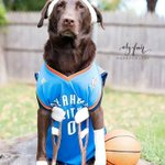 From @elyphotos in OKC: This dog has the most Thunder-appropriate Halloween costume of all time. Sadly accurate. http://t.co/Nw17pEfvQo