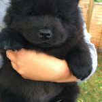 This Ridiculously Cute Puppy Has Been Stolen From Its Owners http://t.co/jEkFfqAwEZ http://t.co/fOVbG8s0Hq