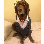 33 Pets Who Are Totally Winning Halloween http://t.co/HJsGxUkyg0 http://t.co/fLnEbTvzWS