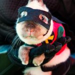 The 50 Absolute Best Animal Costumes Of All Time http://t.co/PPm9vnbcvG http://t.co/wPqhyXu2af