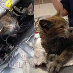 Kitten survives being trapped in the engine of a DRIVING CAR!! It's a #Halloween miracle! http://t.co/aXlk8QAqwu