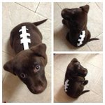 —> RT @Eagles: Cutest #FlyEaglesFly costume this Halloween? Probably. http://t.co/xkc8gnRSSb