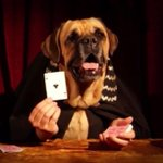 The Great Dogzini performs incredible magic tricks for your amusement. http://t.co/fCgzfGJU16 http://t.co/fD6lGEc1Ef