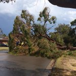 Huge tree down #Sydney #storm http://t.co/aDTuDVyK9c