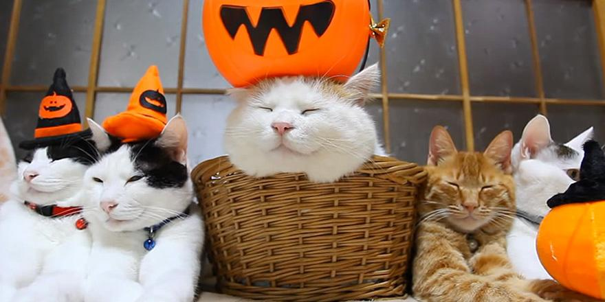 These cats will show you how to have the cutest Halloween ever