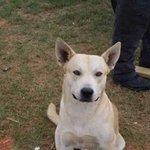 Traficante foge, mas seu cachorro vai atrás e ajuda polícia a encontrá-lo. http://t.co/Xcsm4T4zDb http://t.co/Stl6ezO0TT