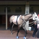 MoonOverManhattan ready to rumble #DerbyDay http://t.co/Ii5FU2hVYv