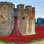 Public urged not to visit the poppies at the Tower of London due to overcrowding http://t.co/1PULOgW1jv (Pic: Rex) http://t.co/aD8AZEHdDn