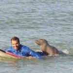 Insolite en #Gironde : le phoque gris qui adore le surf http://t.co/XdszMD1ne6 http://t.co/m0rGAJikPF
