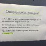 Wer in #Charlottenburg ein #Graupapagei vermisst: der Finder sucht dich :) http://t.co/VrxbiK3wrT