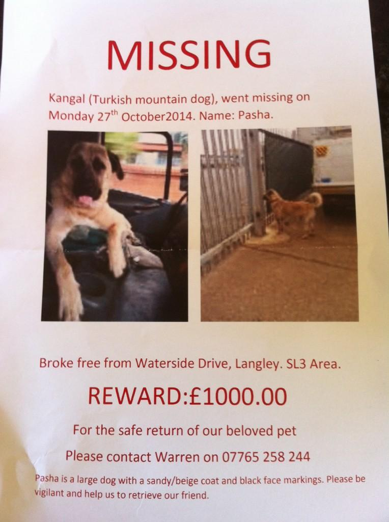 """""""@LostboxUK: RT @SvVenturini: Please RT and let's hope Pasha is found safe and well. Owners are devastated http://t.co/D9UYH0w4O4"""""""