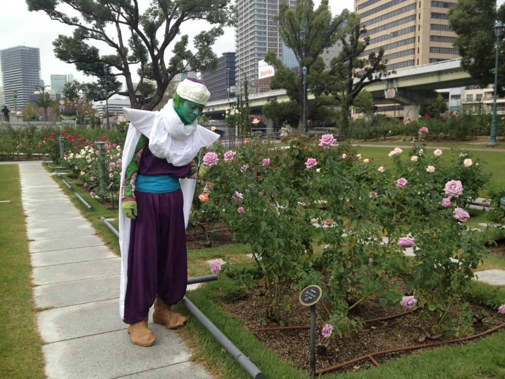 ニコニコ町会議IN大阪終了。 中之島公園に咲く薔薇を見て、在りし日のナメック星に思いを馳せる。 http://t.co/6KCwAgTZ1p