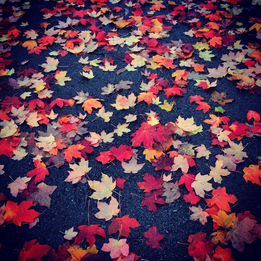 Oh, hello fall, my favorite season.  #AutumnLeaves #November http://t.co/wndigEBJTu