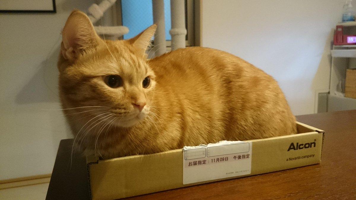 捨て猫ごっこ(ΦωΦ) http://t.co/UWahCD0Fln
