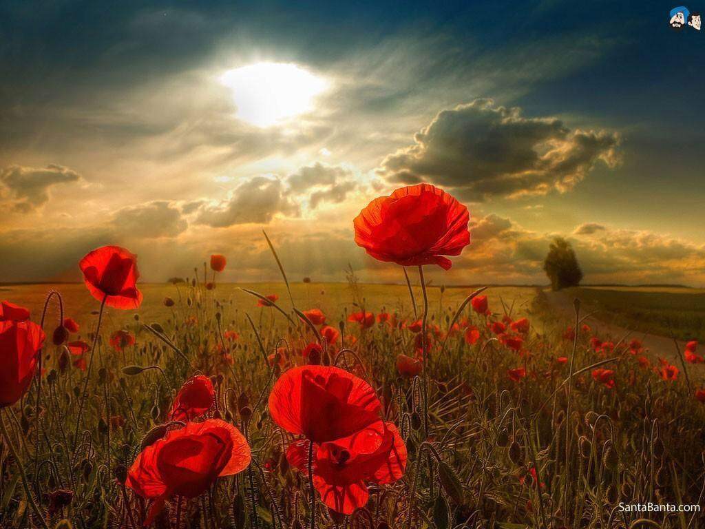 At the going down of the sun. And in the morning. We will remember them. #LestWeForget http://t.co/Bq2Zhz1Wyn