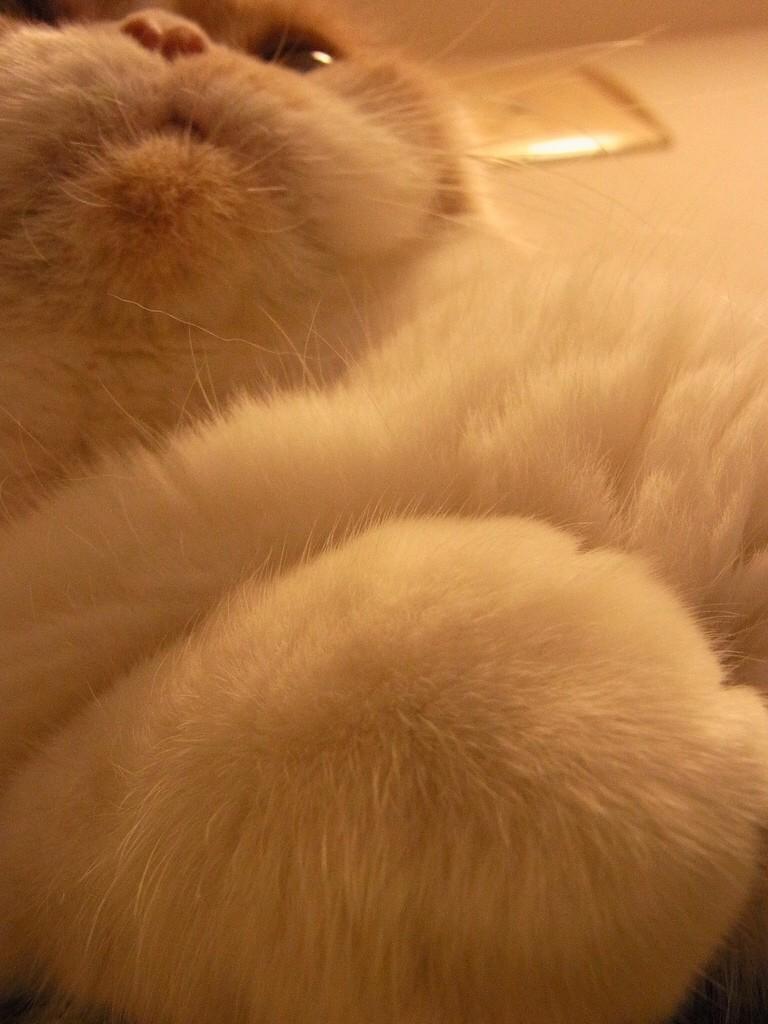 寒いときに見るマルティ写真 http://t.co/JJgRDVc9Ts
