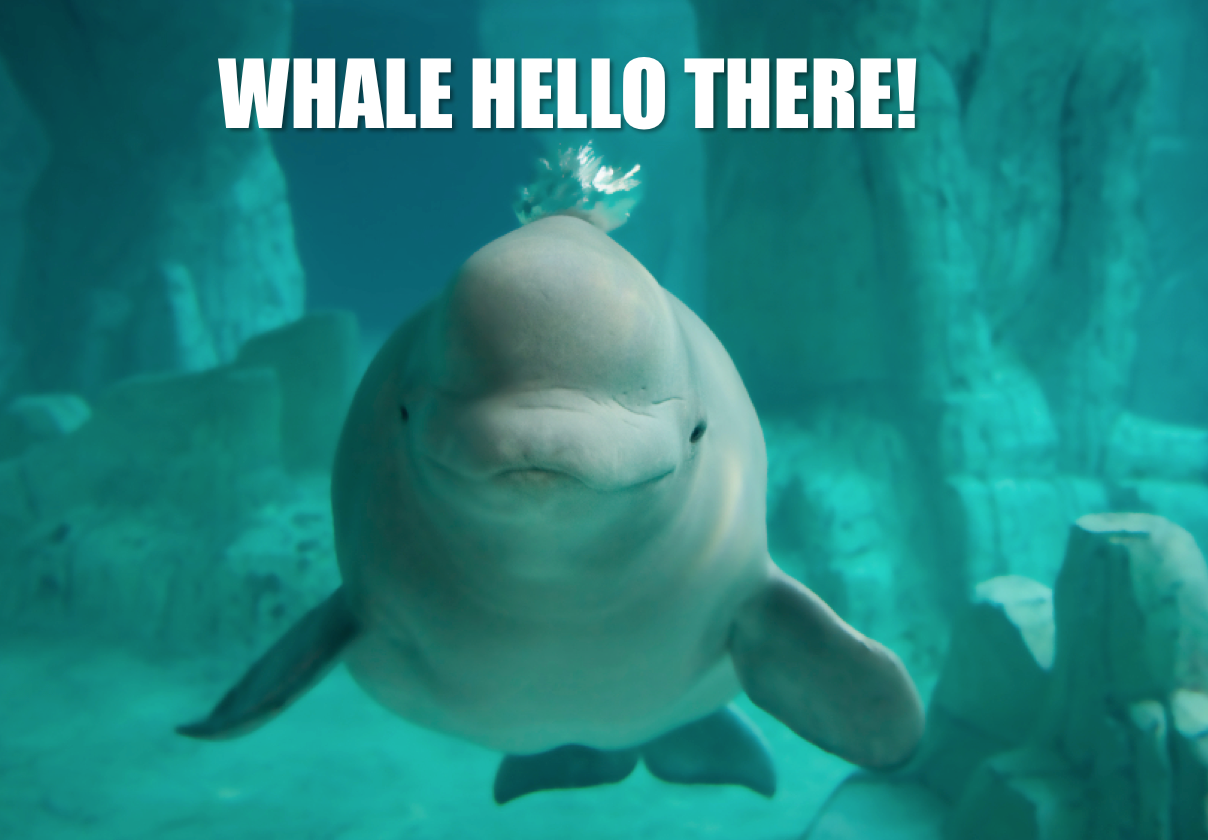 Belugas communicate with clicks & whistles. They can mimic a variety of sounds, maybe even a human hi #RealAnimalTalk http://t.co/nXjtvqanCe