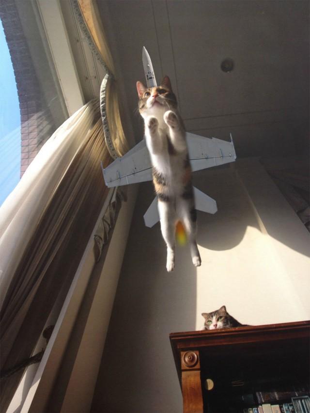 ジェット機と一体化した猫が飛んでいる画像 http://t.co/gCt9VKGLOU http://t.co/qisnXlRwKm