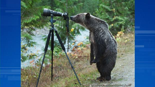 B.C. man's picture of grizzly bear-turned-photographer goes viral http://t.co/QADozfXlJl http://t.co/NHKXnAFH6a