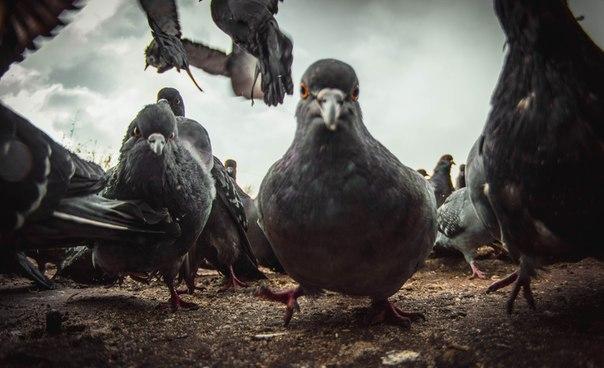 Я | ПЕРНАТЫЕ РАЗБОРКИ Автор: Артём Зигануров #nikonrussia #bird http://t.co/apHHLfr4vI
