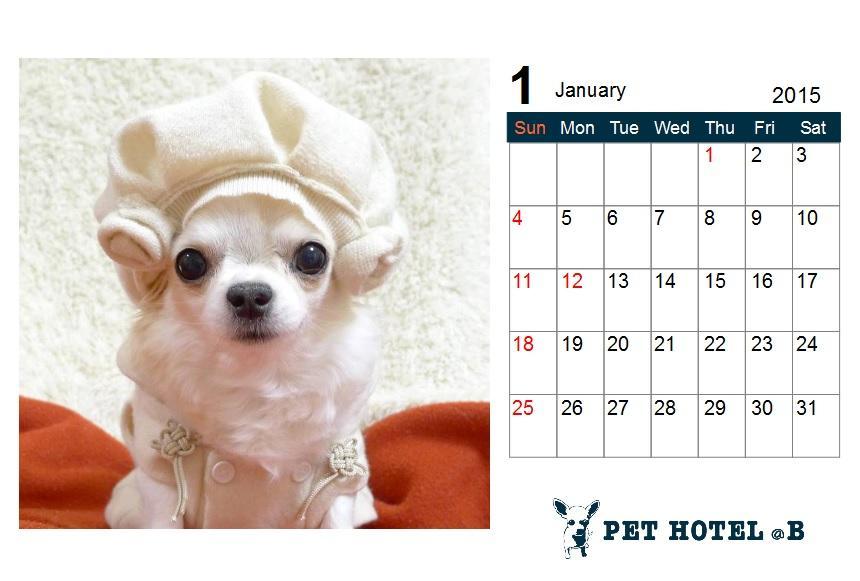 """★2015チワ友・ワン友カレンダー、参加者募集!★ @B毎年恒例カレンダー作りを今年もやらせて頂きたいと思います♪今回は""""12か月ぜーんぶ愛犬写真バージョン""""も加えました!詳細は⇒ http://t.co/gioFP2yelp http://t.co/E7Xf5CAqur"""