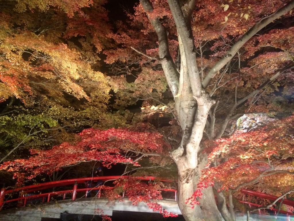 伊香保温泉の紅葉ライトアップ行ってきました(^ ^) 石段街も綺麗になっていて良い感じ! 浴衣着て小路のスナック行きたいな〜♪ http://t.co/Ku6VB3nAUe