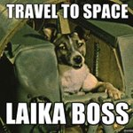 RT @RyInSpace: Happy Laika Night! 1st Earth-creature rocketed to space 3 Nov 1957. Give your dog/pet a treat! http://t.co/fdv0VDflol http:/…