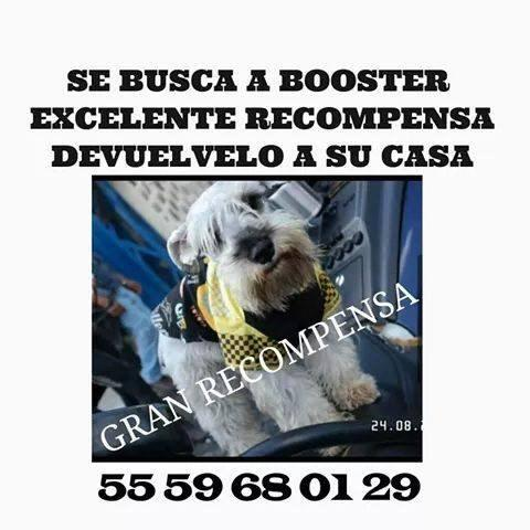 Difundo se busca Rooster  colonia Molino de Rosas Del. #AlvaroObregon #DF por favor RT grx. @PrrosPerdidosMX http://t.co/hI287OuL41