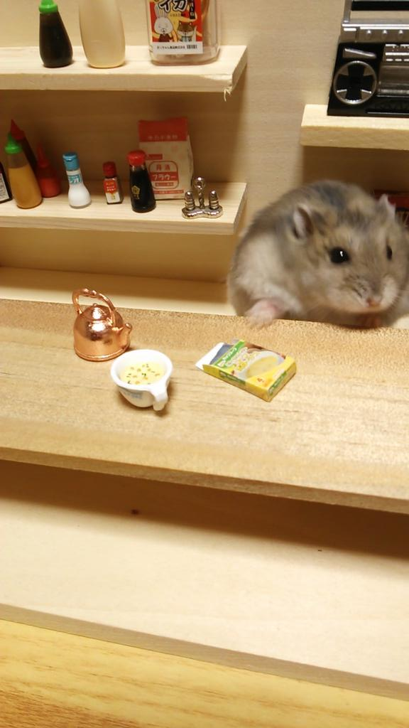 A Whimsical Day In The Life Of This Hamster Bartender And Chef - Hamster bartenders cutest thing youve ever seen