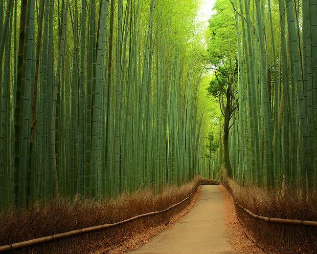 ¿Un lugar para desconectar y relajarse? Los bosques de bambú de Sagano, en Kioto, una propuesta más que interesante http://t.co/nP8tvAeRkF